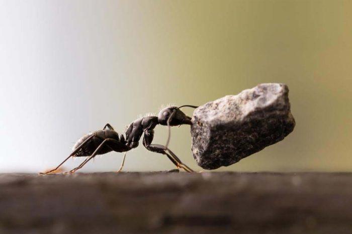 Le formiche di miniera e le formiche fonditrici racconto - Formiche in casa perche ...